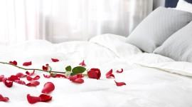 Bed Rose Image Download