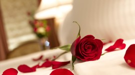 Bed Rose Wallpaper