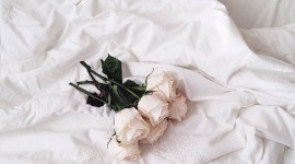 Bed Rose Wallpaper For IPhone