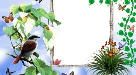 Bird Photo Frames Photo