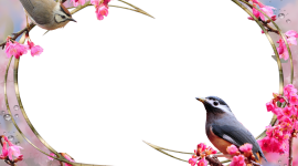 Bird Photo Frames Photo Free