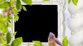Bird Photo Frames Wallpaper Free