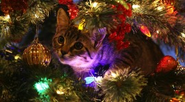 Cat Christmas Tree Aircraft Picture