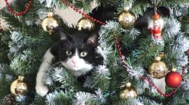 Cat Christmas Tree For Desktop