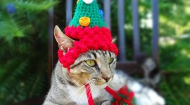 Cat Christmas Tree For Mobile