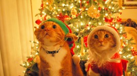 Cat Christmas Tree Image