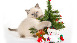 Cat Christmas Tree Image Download
