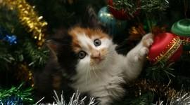 Cat Christmas Tree Photo