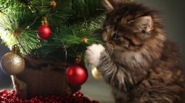 Cat Christmas Tree Photo Free
