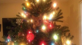 Cat Christmas Tree Picture Download