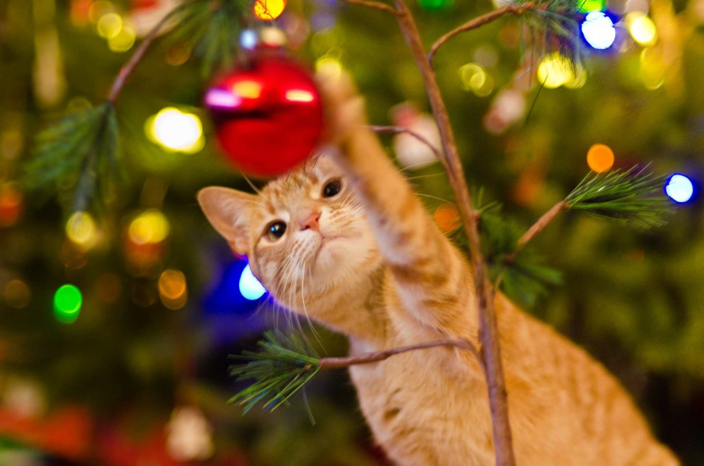 Cat Christmas Tree wallpapers HD
