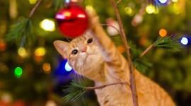 Cat Christmas Tree Wallpaper