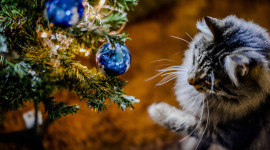 Cat Christmas Tree Wallpaper For PC