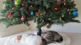 Cat Christmas Tree Wallpaper Free