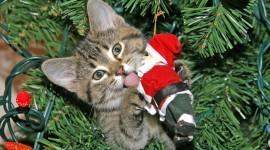 Cat Christmas Tree Wallpaper Gallery