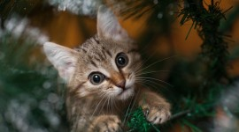 Cat Christmas Tree Wallpaper HQ