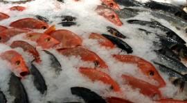 Frozen Fish Best Wallpaper