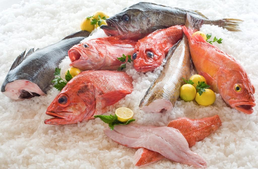 Frozen Fish wallpapers HD