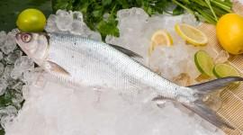 Frozen Fish Wallpaper 1080p
