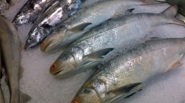 Frozen Fish Wallpaper