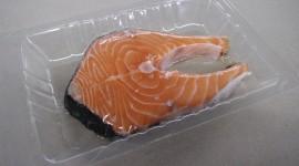 Frozen Fish Wallpaper Download