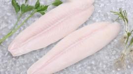 Frozen Fish Wallpaper Download Free