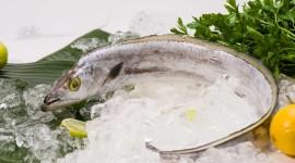 Frozen Fish Wallpaper High Definition