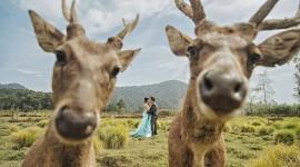 Funny Deer Photo