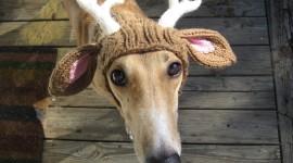 Funny Deer Photo Download
