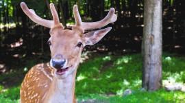 Funny Deer Photo Free