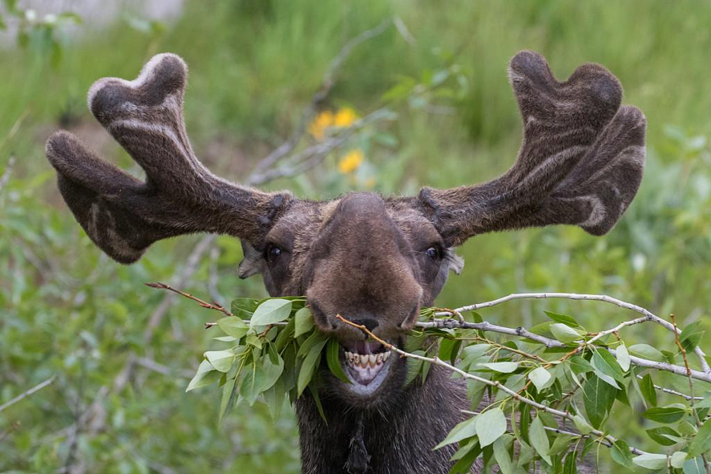 Funny Deer wallpapers HD