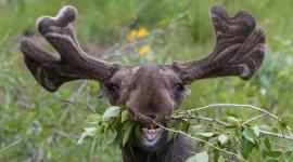 Funny Deer Wallpaper