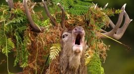 Funny Deer Wallpaper For Desktop
