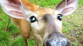 Funny Deer Wallpaper For Mobile