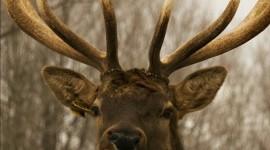 Funny Deer Wallpaper For PC