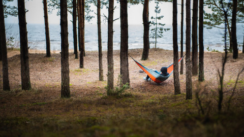 Hammock In The Forest wallpapers high quality
