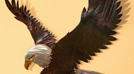 Metal Eagle Wallpaper For IPhone