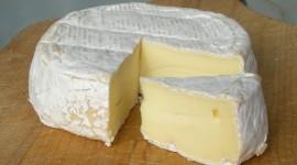 Milk Cheese Wallpaper High Definition