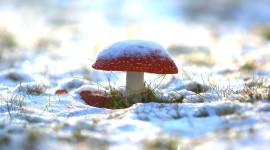Mushrooms Snow Image