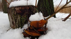Mushrooms Snow Photo