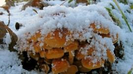 Mushrooms Snow Photo#1