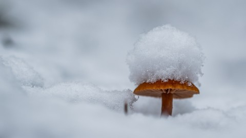 Mushrooms Snow wallpapers high quality