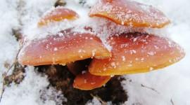 Mushrooms Snow Wallpaper Gallery