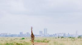Nairobi Wallpaper Background