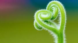 Nature Macro Image Download