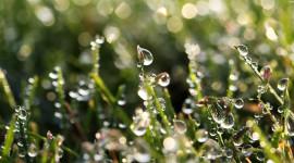 Nature Macro Photo Download