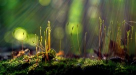 Nature Macro Picture Download
