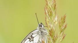 Nature Macro Wallpaper For IPhone