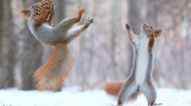Squirrel Snow Photo