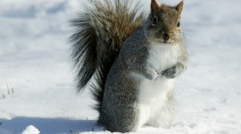 Squirrel Snow Photo Download